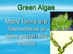 green algae18