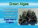 green algae19