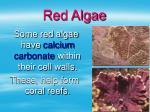 red algae26
