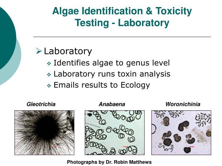 Algae Identification & Toxicity Testing - Laboratory