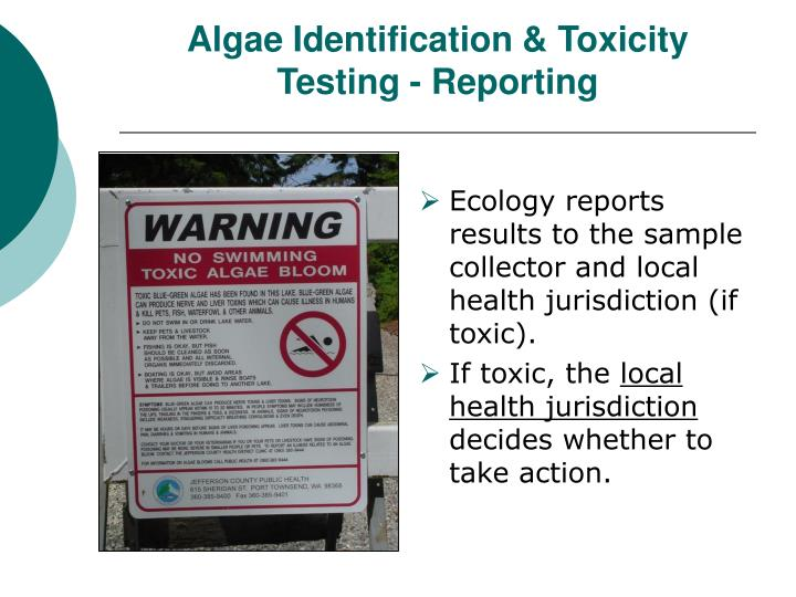 Algae Identification & Toxicity Testing - Reporting