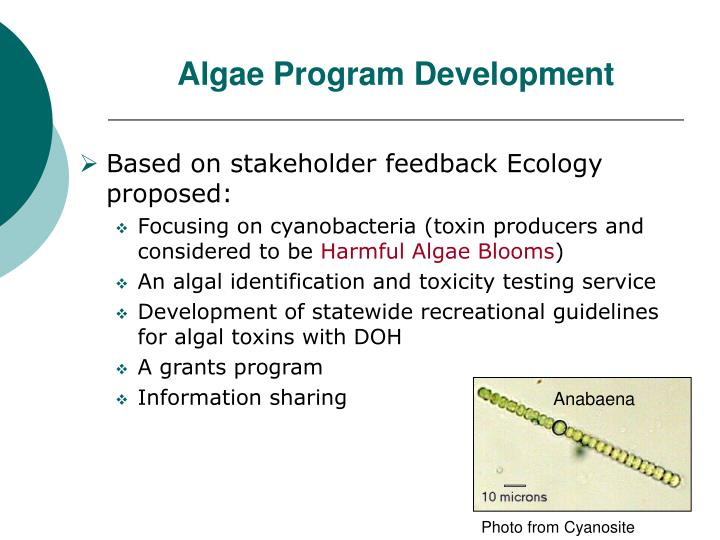 Algae Program Development