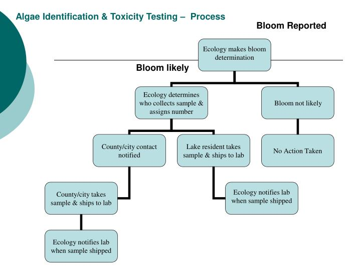 Algae Identification & Toxicity Testing –  Process