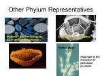 other phylum representatives