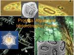 protista algae and heterotrophic protist