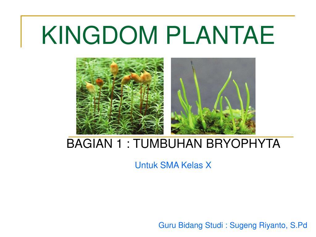 kingdom plantae l.