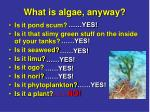 what is algae anyway