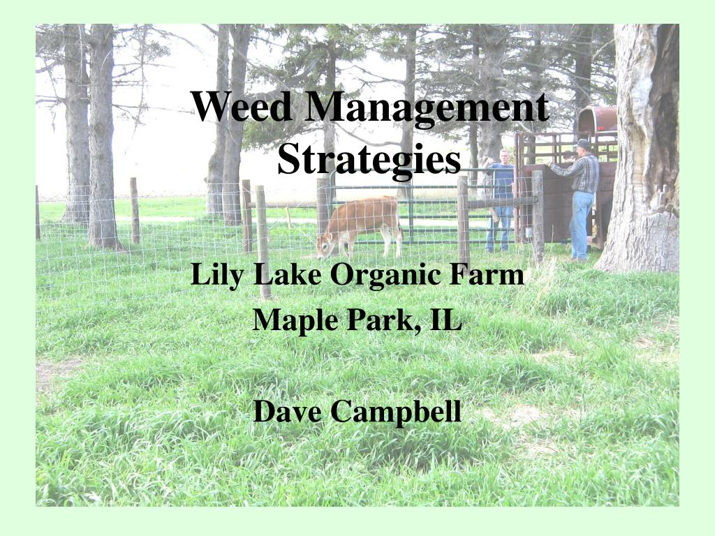 weed management strategies l.