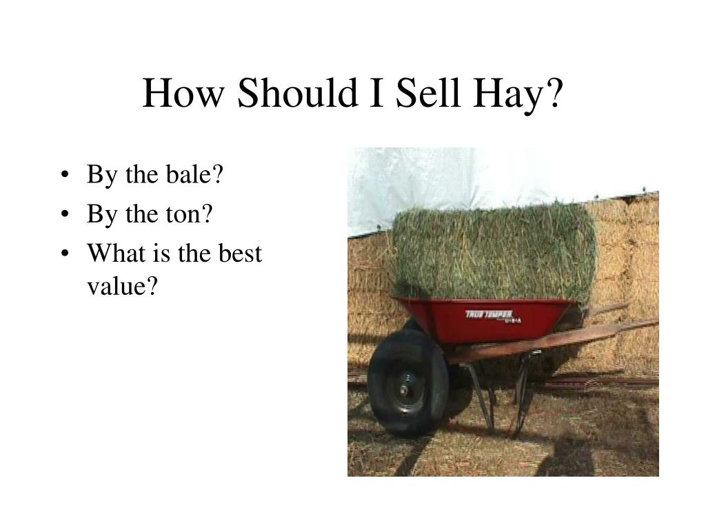How Should I Sell Hay?