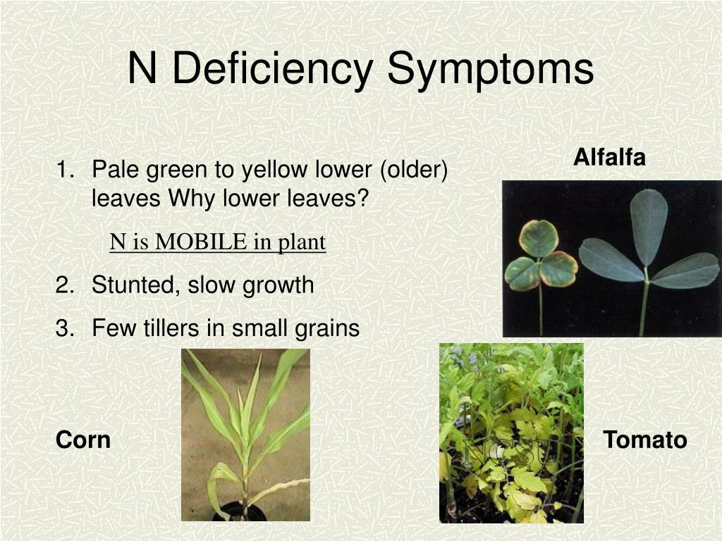 N Deficiency Symptoms