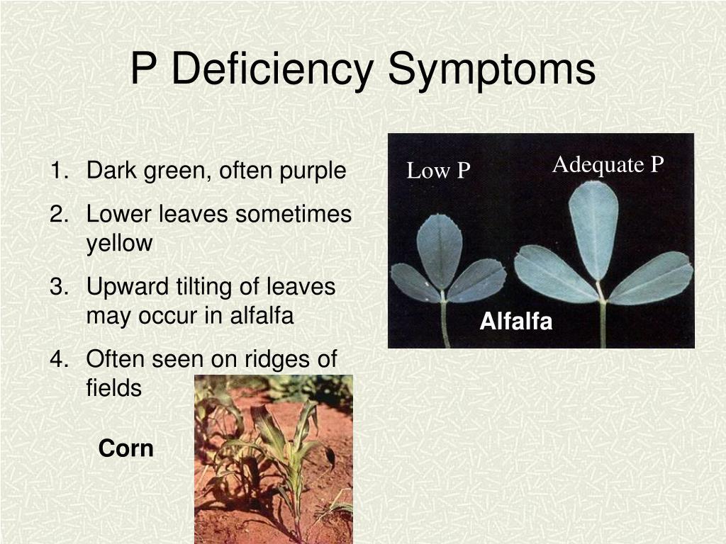 P Deficiency Symptoms
