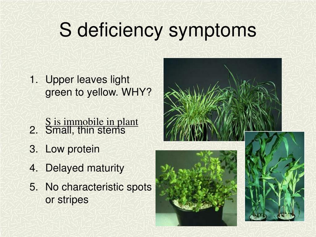 S deficiency symptoms