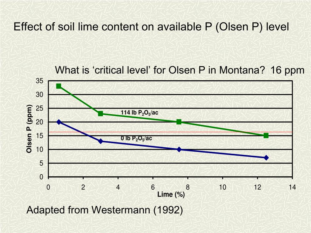 Effect of soil lime content on available P (Olsen P) level