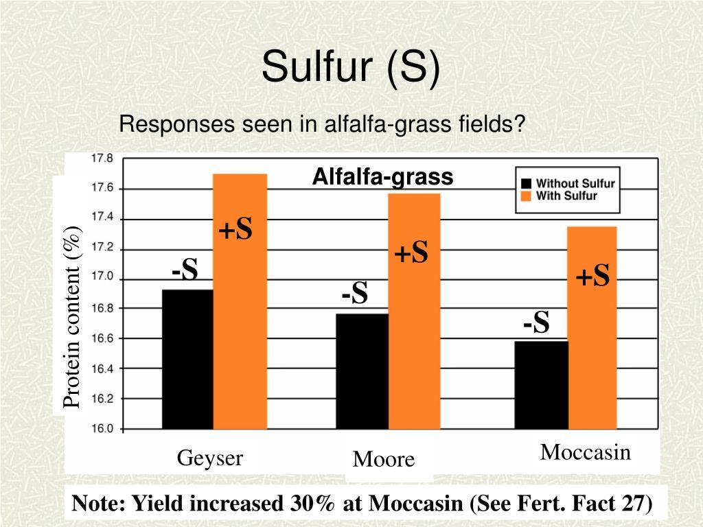 Alfalfa-grass