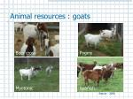 animal resources goats