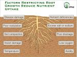 factors restricting root growth reduce nutrient uptake