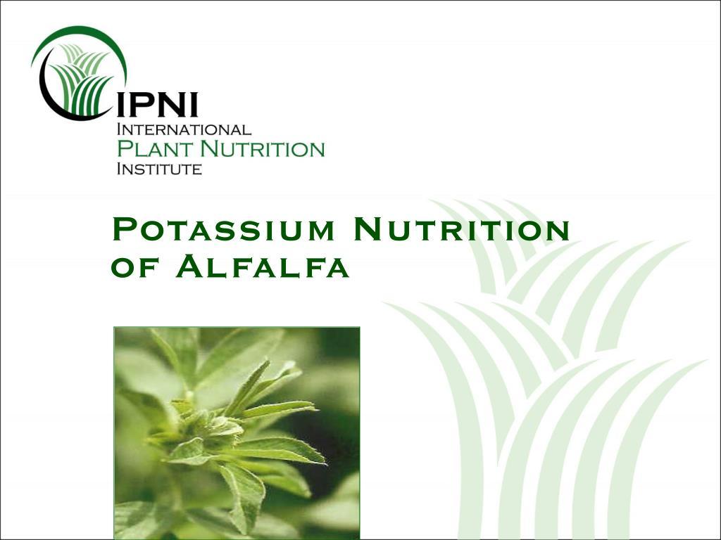 potassium nutrition of alfalfa l.
