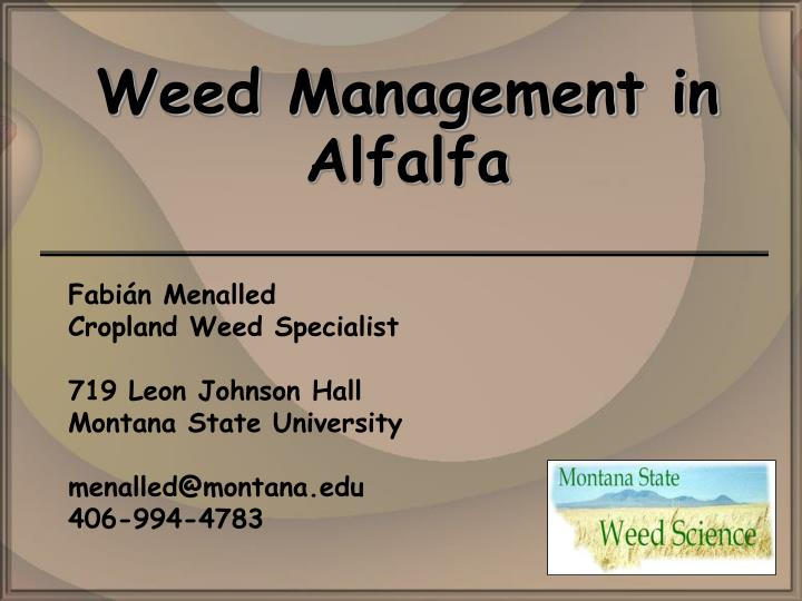 weed management in alfalfa n.