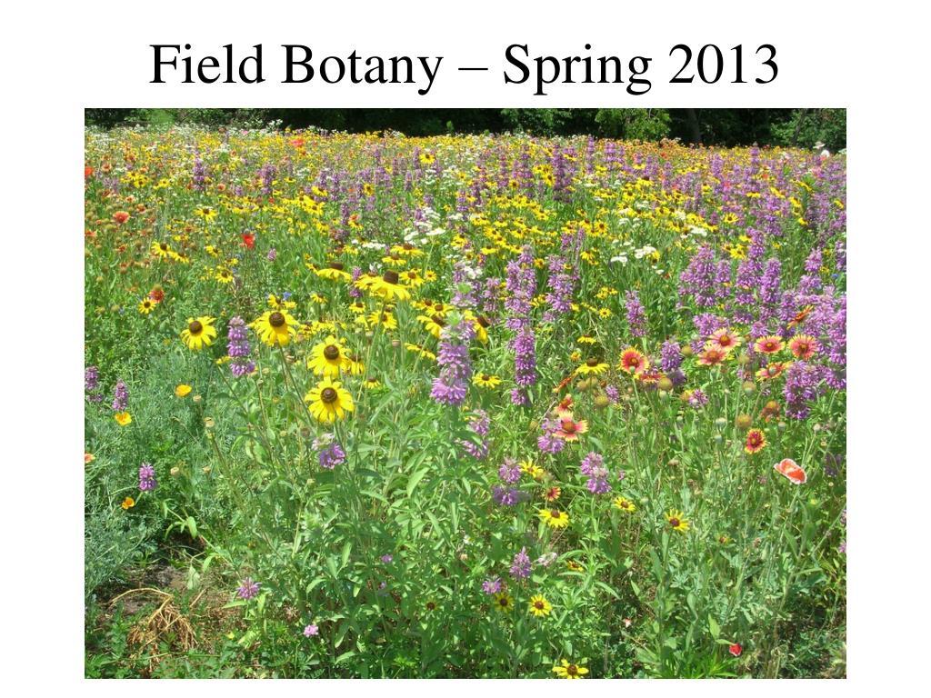 field botany spring 2013 l.