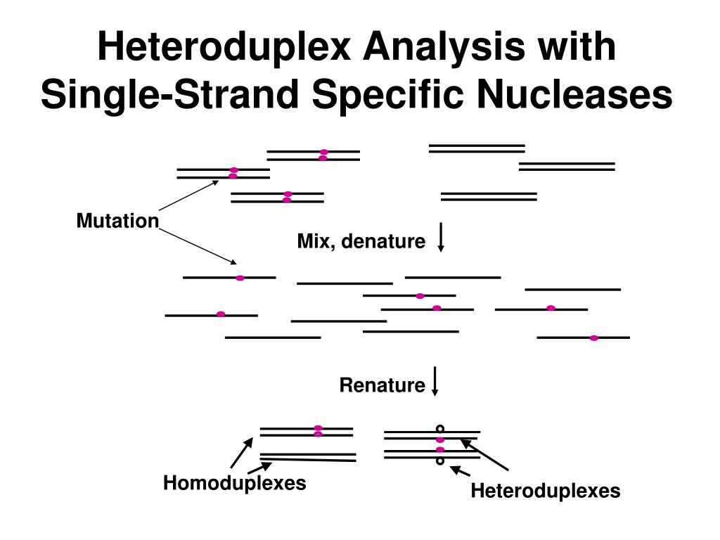 Heteroduplex Analysis with Single-Strand
