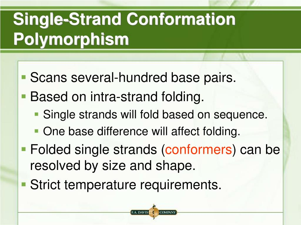 Single-Strand Conformation Polymorphism