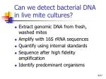 can we detect bacterial dna in live mite cultures