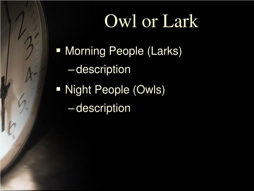 Owl or Lark