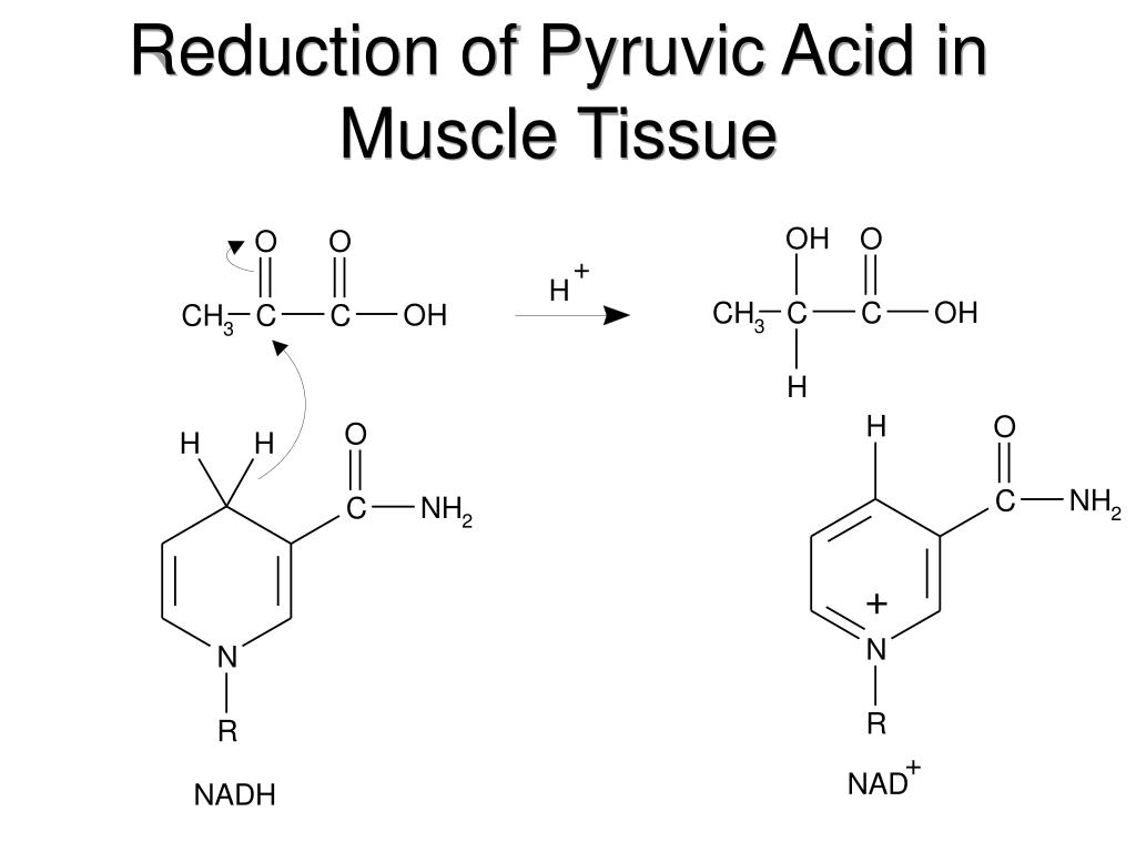 Reduction of Pyruvic Acid in Muscle Tissue
