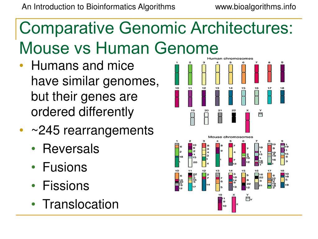 Comparative Genomic Architectures: Mouse vs Human Genome