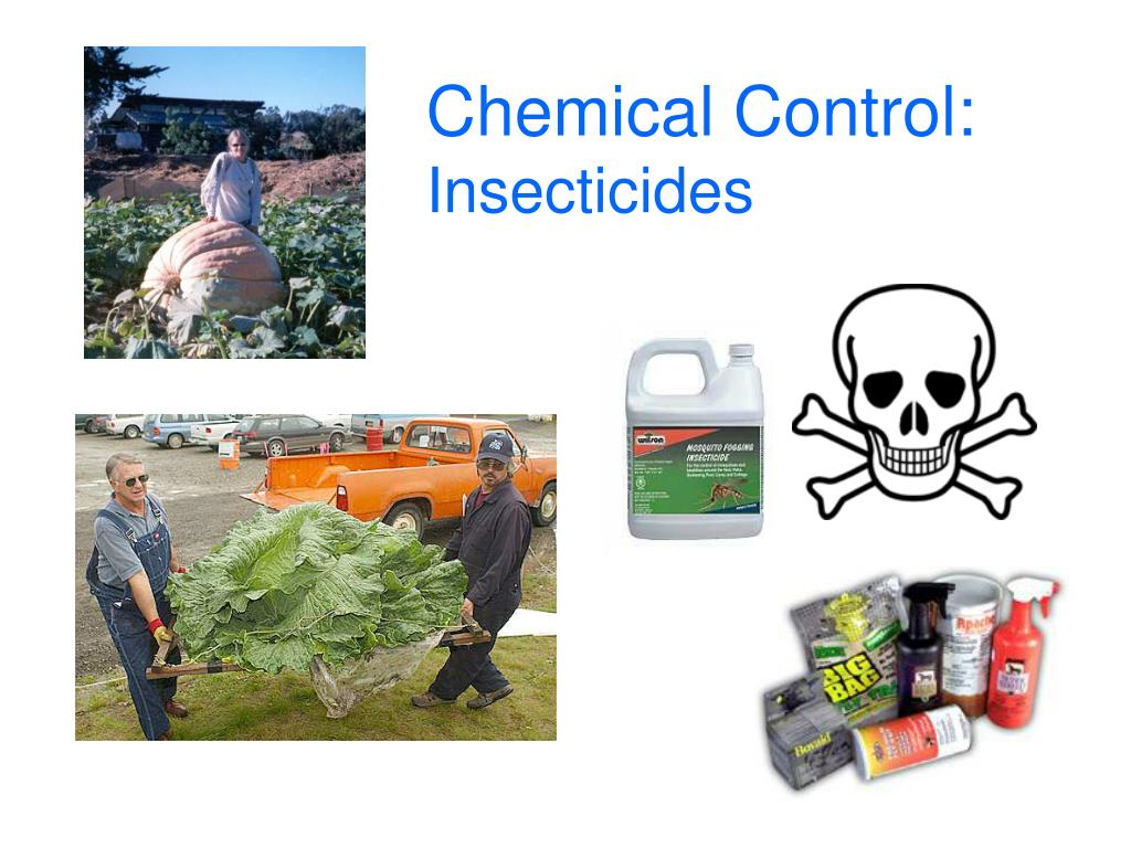 chemical control insecticides l.