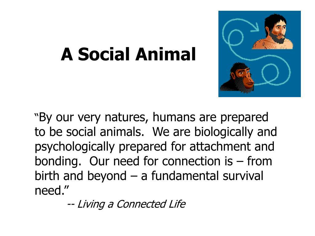 A Social Animal