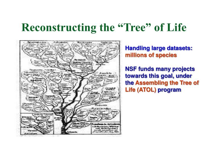 Reconstructing the tree of life