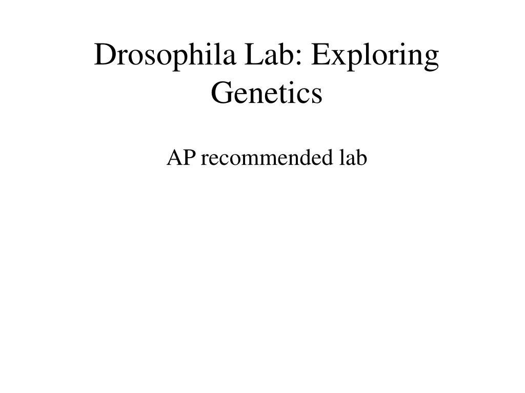 drosophila lab exploring genetics l.