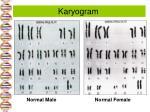 karyogram