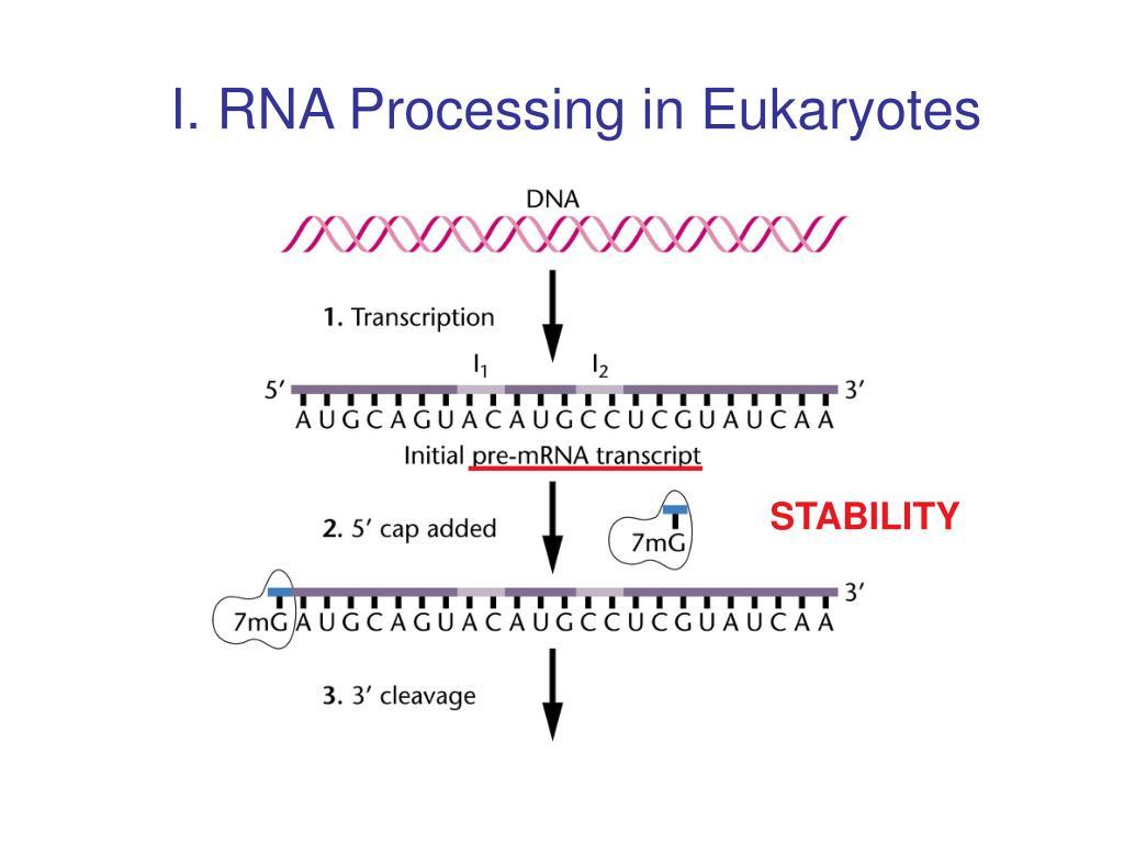 I. RNA Processing in Eukaryotes