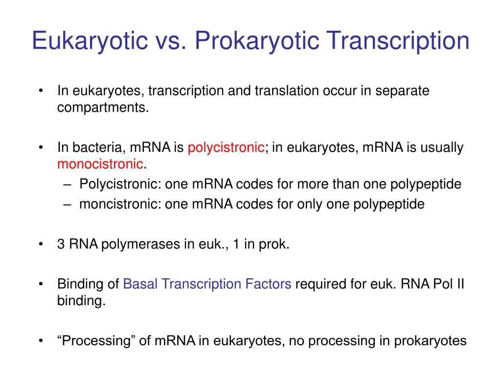 Eukaryotic vs. Prokaryotic Transcription