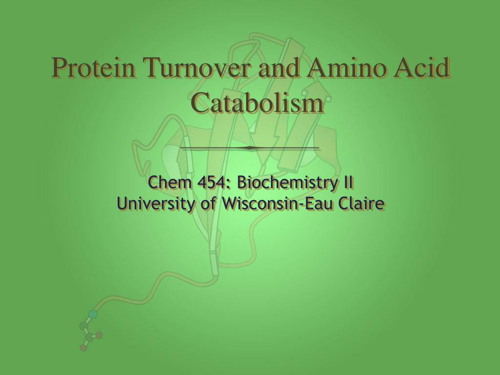 protein turnover and amino acid catabolism l.