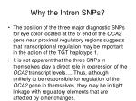 why the intron snps