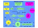 protein metabolism2