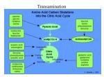 transamination6