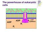 the powerhouse of eukaryotic cells6