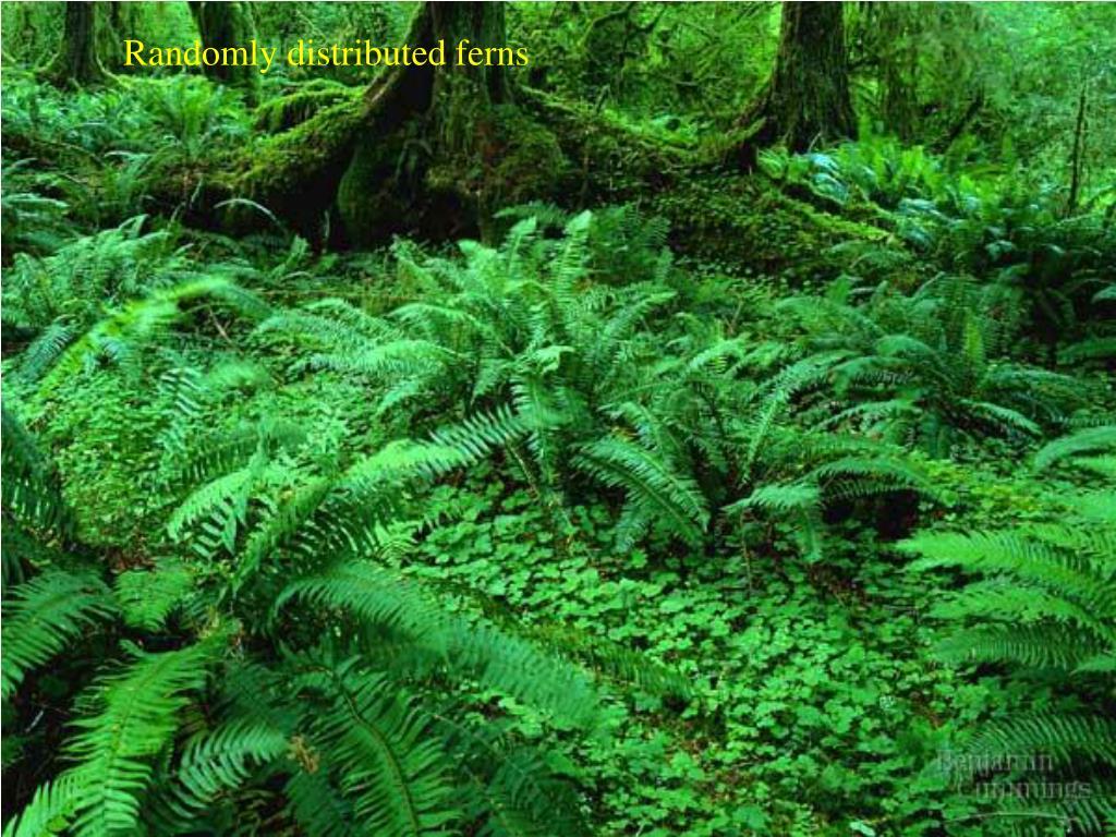 Randomly distributed ferns