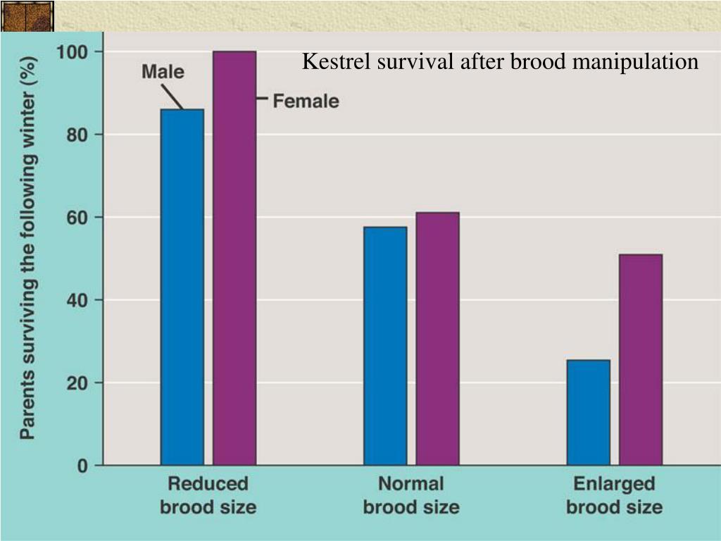 Kestrel survival after brood manipulation