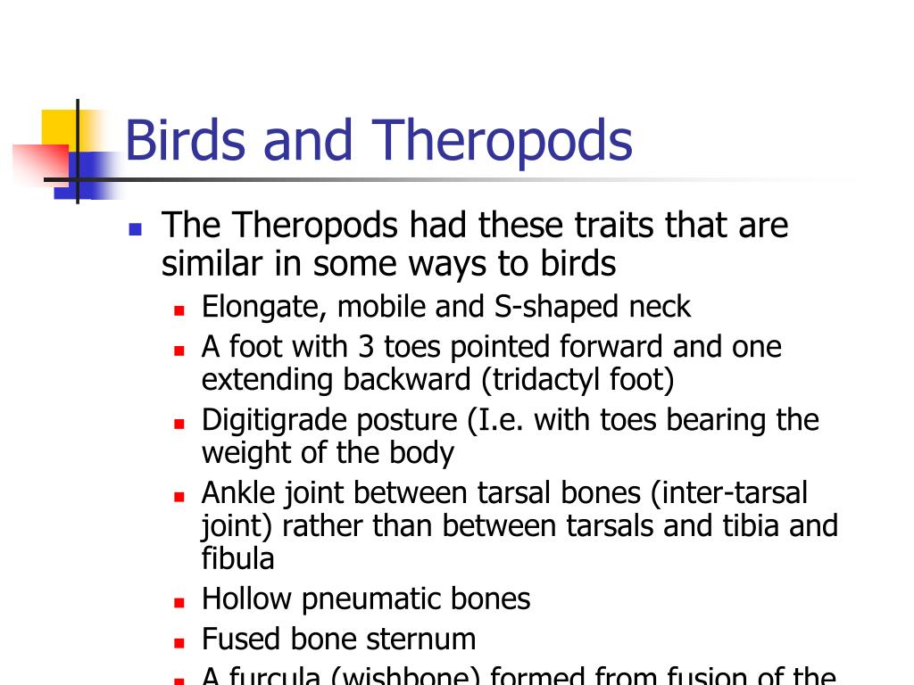 birds and theropods l.