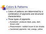 colors patterns