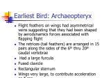 earliest bird archaeopteryx3