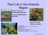 plant life in the antarctic region