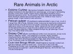rare animals in arctic