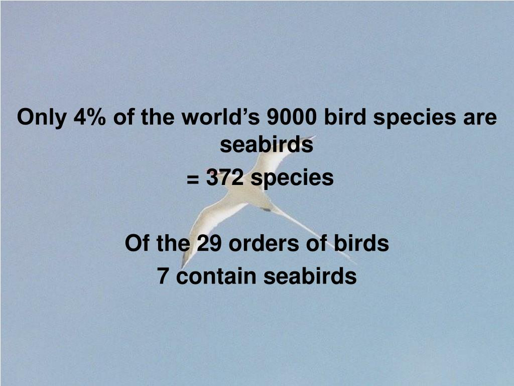 Only 4% of the world's 9000 bird species are seabirds