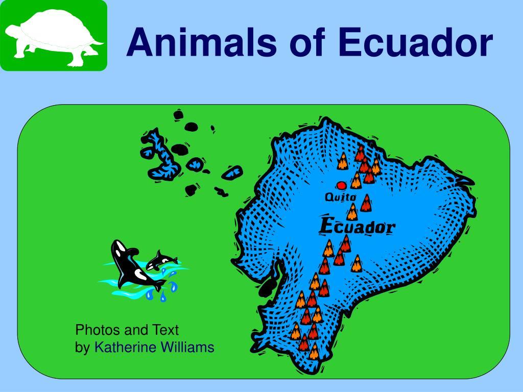 animals of ecuador l.